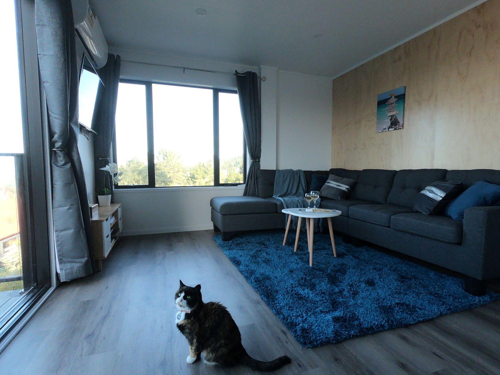 Cat modelling living room